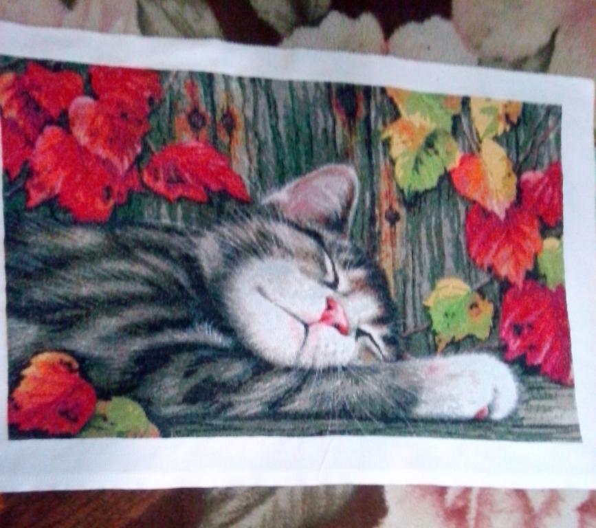 Нажмите на изображение для увеличения.  Название:кот готов.jpg Просмотров:316 Размер:81.6 Кб ID:165989