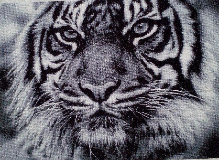 Нажмите на изображение для увеличения.  Название:отшив Тигр Химера.jpg Просмотров:124 Размер:247.8 Кб ID:176840