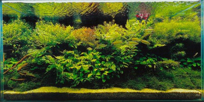 Нажмите на изображение для увеличения.  Название:gallery056.jpg Просмотров:425 Размер:107.4 Кб ID:1700
