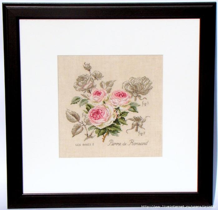 DFEA etude botanique rose