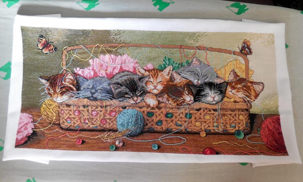 Нажмите на изображение для увеличения.  Название:новорожденные котята мурзилка 3.12.14.jpg Просмотров:277 Размер:127.7 Кб ID:154990